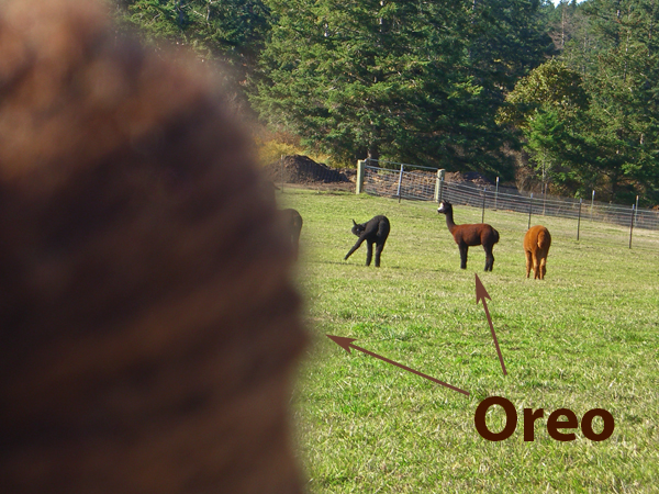 my friend Oreo, and my friend Oreo
